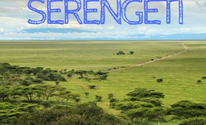 The Great Migration in Serengeti National Park